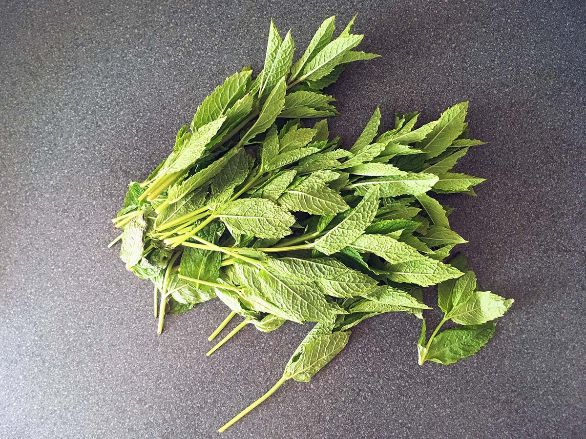 fresh mint how to make homemade mint sauce